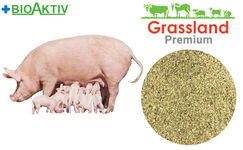 Concentrate Grassland for lactating sows 20% (Premium)
