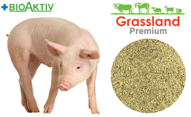 """Concentrate Grassland for pigs """"Starting"""" 20% (Premium)"""
