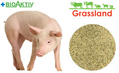 """Concentrate Grassland for pigs """"Starting"""" 25% (Standart)"""