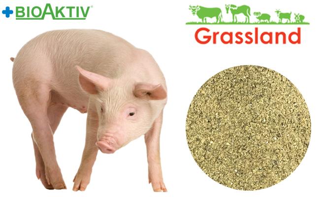 """Концентрат БМВД Grassland для свиней """"Стартовый"""" 25% (Стандарт)"""