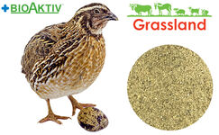 "Concentrate Grassland for quail ""Grover/Finish"" 25%/20% (Standart)"