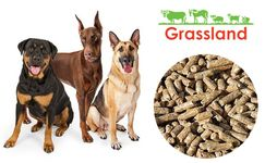 Compound feed Grassland for adult dogs of large breeds