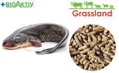 """Compound feed Grassland for catfishes """"Start"""""""