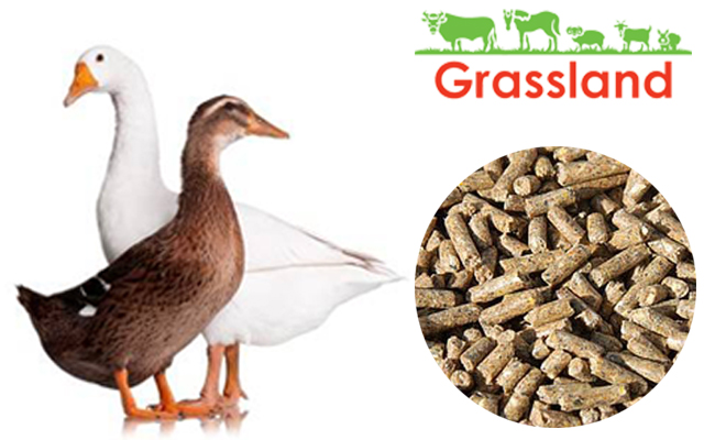 "Compound feed Grassland for ducks and geese ""Finish"" from 85 days (Standard)"