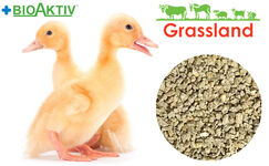 """Compound feed Grassland for ducks and geese """"Starting"""" 1-21 days (Standard)"""