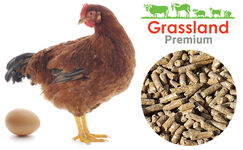 "Compound feed Grassland for laying hens ""Laying period"" (Premium)"