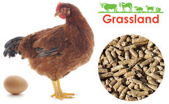 "Compound feed Grassland for laying hens ""Laying period"" (Standard)"
