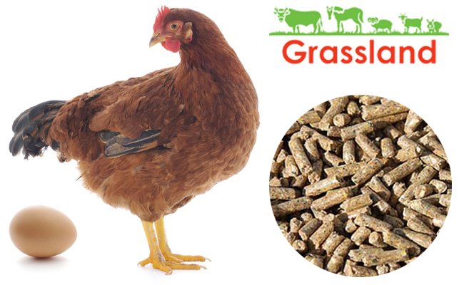 """Compound feed Grassland for laying hens """"Laying period"""" (Standard)"""