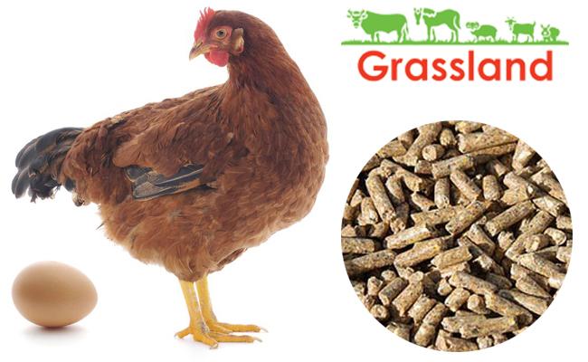"Комбикорм Grassland для кур несушек ""Период яйцекладки» (Стандарт)"
