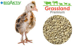 "Compound feed Grassland for laying hens ""Grover"" (Premium)"