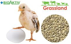 "Compound feed Grassland for chickens of the layer hens ""Starting"" (Standart)"