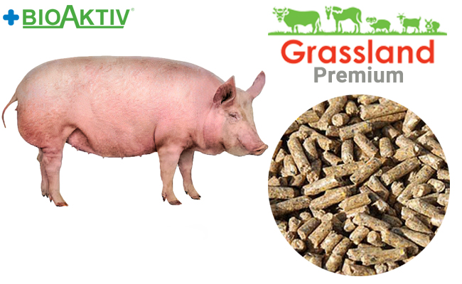"""Compound feed Grassland for pigs """"Finish"""" 100% (Premium)"""