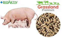 Compound feed Grassland for pregnant sows 100% (Premium)