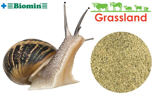Комбикорм Grassland для маточного поголовья улиток (Стандарт)