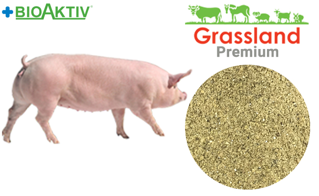 Concentrate Grassland for pregnant sows 20% (Premium)