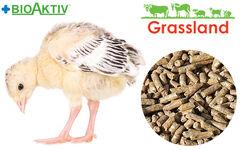 "Compound feed Grassland for turkeys ""Starting"" (Standard)"