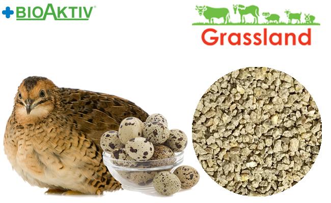 Комбікорм Grassland для перепела в період яйцекладки (Стандарт)