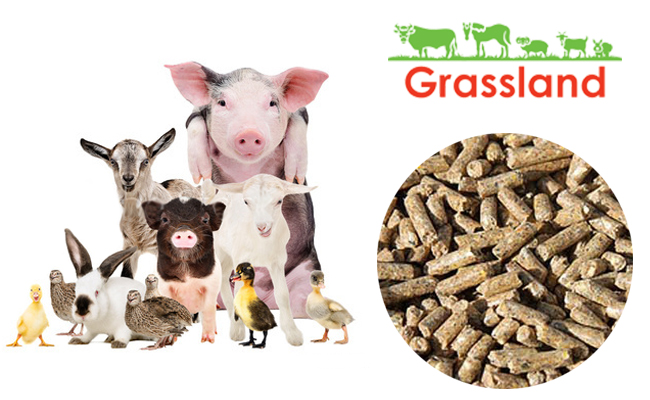 Universal complete feed Grassland for livestock and poultry (supporting)